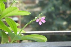 Dobry kwiatu pączek i flowrer Zdjęcie Royalty Free