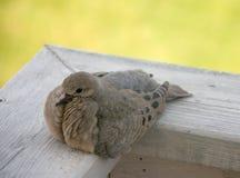 dobry ptaszek obrazy stock