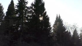 Dobry widok na zimy zieleni drzewach zbiory wideo