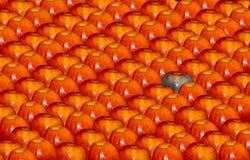 Dobrzy jabłka, zły jabłko fotografia royalty free