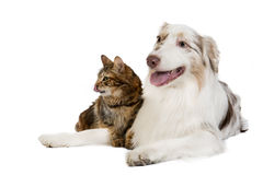 Doc and cat Royalty Free Stock Photography