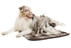 Doc and cat Stock Photography