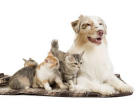 Doc and cat Royalty Free Stock Photo