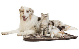Doc and cat Stock Images
