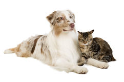Doc and cat Royalty Free Stock Photos