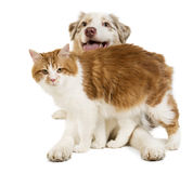 Doc and cat Stock Image