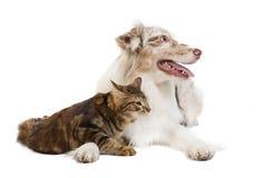 Doc and cat Stock Photos