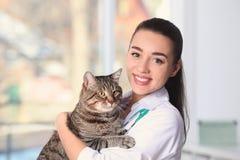 Doc. de vétérinaire avec le chat chez la clinique animale images stock