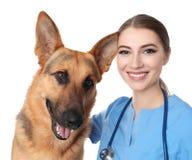 Doc. de vétérinaire avec le chien sur le blanc photo stock