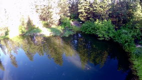 Doc in a small pond in the mountains stock footage