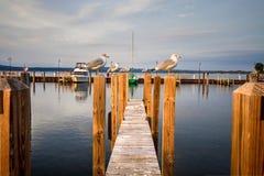 Doca de madeira com as gaivotas em Michigan Fotos de Stock Royalty Free