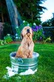 Doccia del cane Immagine Stock