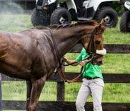 Doccia del cavallo Fotografie Stock