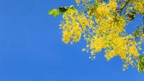 Doccia dorata Fotografia Stock Libera da Diritti