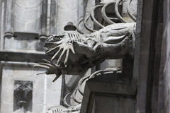 Doccione dell'iguana sul del Voto Nacional della basilica Fotografia Stock Libera da Diritti
