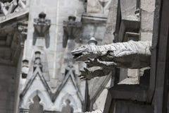 Doccione della lucertola sul del Voto Nacional della basilica Immagini Stock