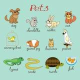 Doce animales domésticos Foto de archivo