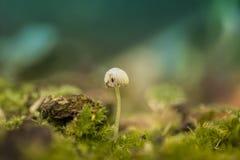 Doce claro pequeno dos fungos de cogumelo fotografia de stock