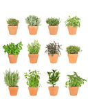 Doce hierbas en crisoles fotografía de archivo