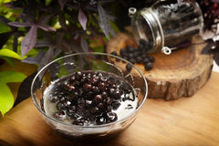 Doce natural e orgânico de Forrest Berries - mirtilo de Aronia -, miliampère Imagens de Stock Royalty Free