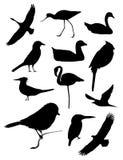 Doce siluetas del pájaro Foto de archivo libre de regalías