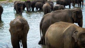 Docenas de elefantes agrupados en un depósito en safari almacen de metraje de vídeo