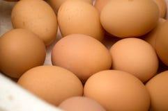 Docenas de huevos en un cartón Imagenes de archivo