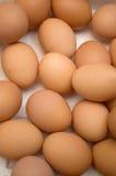 Docenas de huevos en un cartón Fotografía de archivo libre de regalías