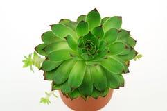 doceniam roślin Zdjęcia Stock