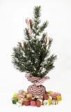 Doces Cane Tree Imagem de Stock