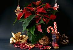 Doces do Natal Fotos de Stock Royalty Free