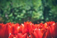 Doces pequenos coloridos fotografia de stock royalty free