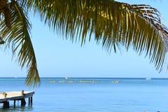 Dock along the Caribbean Ocean, Roatan, Honduras. Dock in Roatan, Honduras framed by a palm tree Stock Images