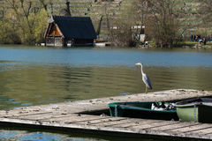 Dock-Boots-Sunny Lake Landscape Beautiful Idyllic-Atmosphäre Envi lizenzfreies stockbild
