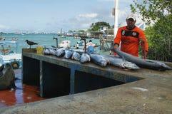 Dock de pêcheurs dans Puerto Ayora, Santa Cruz Image stock