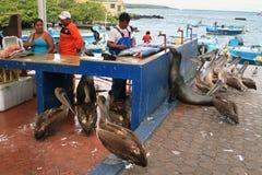 Dock de pêcheurs dans Puerto Ayora, Santa Cruz Photographie stock libre de droits