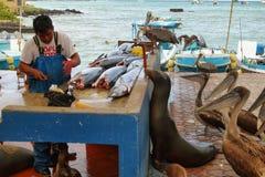 Dock de pêcheurs dans Puerto Ayora, Santa Cruz Photo stock
