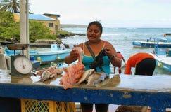 Dock de pêcheurs dans Puerto Ayora, Santa Cruz Images stock