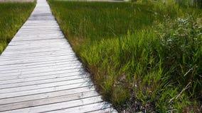 Dock de promenade par la plage herbeuse à l'eau Photographie stock