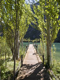 Dock into a lake among trees. Wooden jetty in a lake. Walk among poplars Royalty Free Stock Image