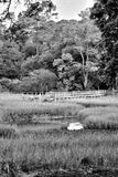 Dock on the Marsh. Dock on the edge of the woods at the beach marsh side Stock Images