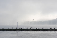 Dock pier with seagulls Stock Images