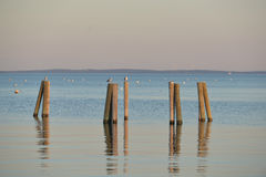 Dock pilings on Penobscot Bay inside the Rockland Breakwater and. Harbor with nesting seagulls sitting on the pilings Stock Photos