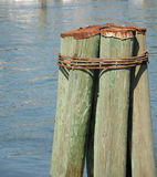 Dock pylons. In a waterway during the summer Stock Photography