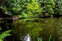 Dock on a Quiet Pond in the Woods. Stock Image