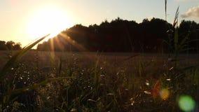 Dockan sköt spåring längs gräs- och vetefält, med guld- solnedgång, dramatisk himmel och linssignalljuset i östliga Frisia, den n arkivfilmer