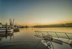 Docks rising stock images