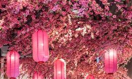 Docoration rosado del árbol de la linterna y de la flor de Sakura Fotografía de archivo libre de regalías