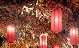 Docoration rosado del árbol de la linterna y de la flor de Sakura Foto de archivo libre de regalías