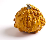 Docorative Gourd Stock Images
